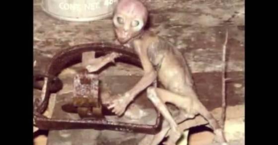 48478-ilyke.net-smallv2-UFO_Sightings_Cryptoid_Alien_Species_Found_In_Mexico_Jaime_Maussan_Exclusive_Interview_2013__153499.jpg