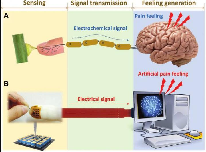 This Won't Hurt A Bit..Oh But It Will! - PsychoSensory Electronic Skin Technology For Future A.I. And Humanoid Development
