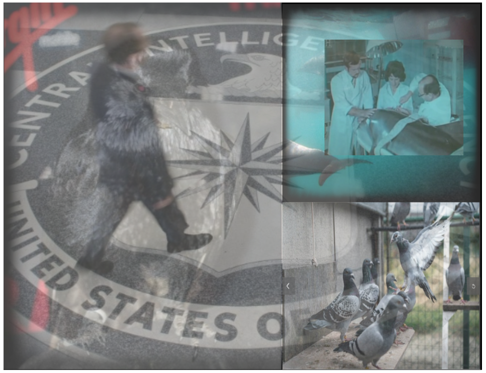 cia EXPERIMENTS on all living things - dismantle now?
