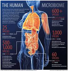 the gut: where bacteria and the immune system meet   Johns hopkins articles on the microbiome and the immune system