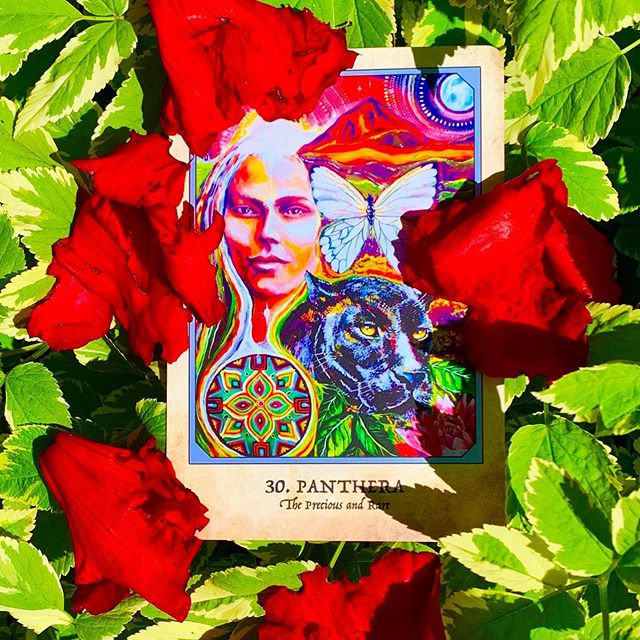 """NEW MOON ♉️ CONJUNCT URANUS ♉️ reading for the collective. : ; , """" PANTHERA~The Precious and Rare. Our faith and optimism are not meant to make us complacent, but, rather, to encourage us to believe that our action in the world will have a positive and real effect. There are situations where your voice, your courage, and your fearless determination are needed. You will make a difference. Cast helplessness or despair aside and find the fighter within. Fight for that which needs defending with all of your heart. Do not yield. : You have the strength to handle any challenge, even the ones that intimidate you. You may feel that you are alone in the fight sometimes, but there are forces of good in Spirit and upon the earth that are fighting with you, supporting you, believing in you, assisting you and championing your success. It may not always feel like it, but you are not in this alone. There is help at hand to uncover hidden piece of information which will allow truth and justice to prevail. : Do not give up on yourself for the divine. You were not overreacting or making things seem more important than they are in truth. When in the face of possible loss something deep in our soul recoils in horror, it is a sign that something is not right. It is not a sign that we are too attached or not trusting enough in the Divine to figure everything out. It is a sign that we must fight to safeguard what would otherwise perish. : We are not here to be passive consumers of whatever the dominant mainstream consciousness tries to enact in the world. We are here to be the embodiment of loving consciousness—to be the fearless, determined and actors of wisdom. We are here to educate, to inform, to rebel and refuse, to speak up, to make waves and to honor the light in such a way that we protect and preserve what has real value in this world."""" :    : Time to rise up and remember, who we are. #alllifeisacred #ahomitakuyeoyasin And the revolution is here, in our embracing of the Truth of o"""