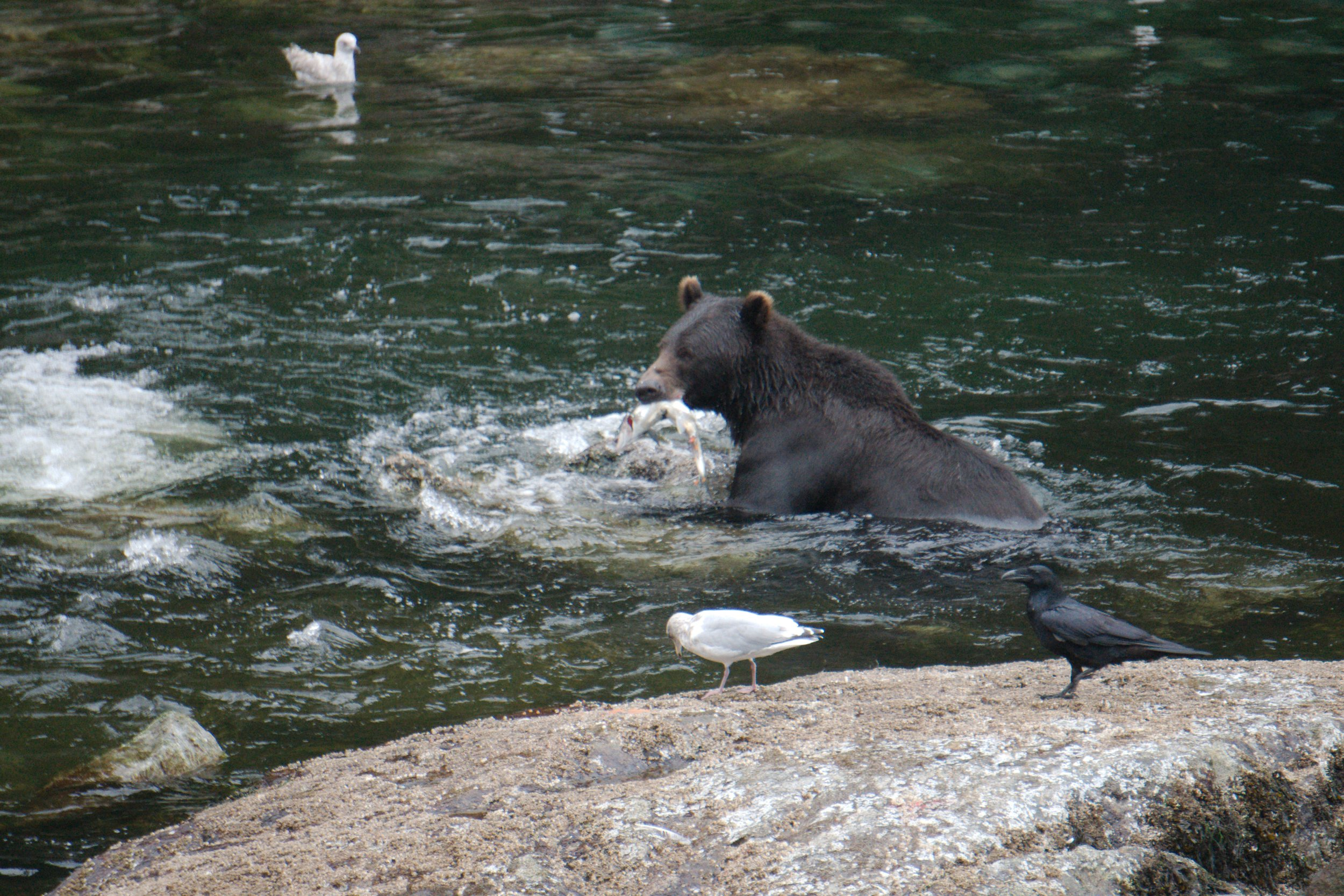 June 14 - June 23 Available - Juneau to KetchikanBook before January 1st and save 15%