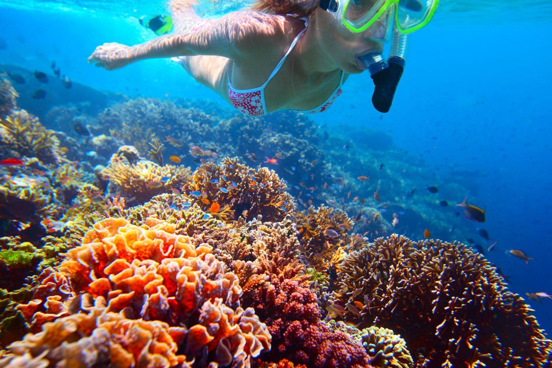 snorkel 1.jpg