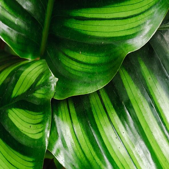 Waxy-Tropical-Leaves-min.jpg