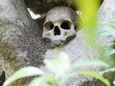 The skull of a victim of cannibalism on Malekula.  Photo credit: malampa.travel