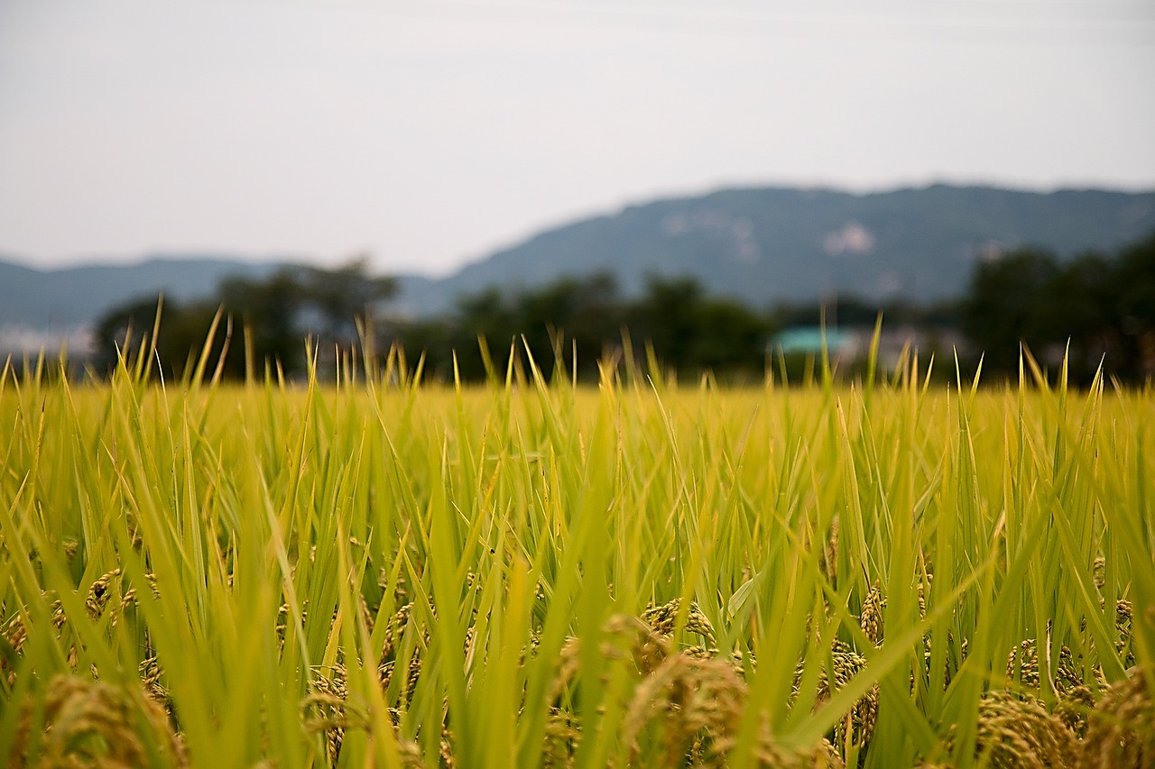Offering the premier marketing mix for the CA rice producer.