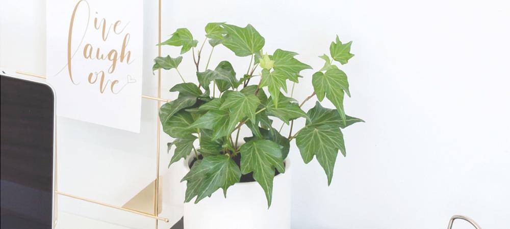 plant christmas gift.png