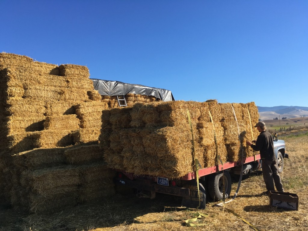 Earlier this week Patrick and Northside Leader Brian, delivered straw to all the gardens. Use straw to help prep your plot for the cold temps ahead.