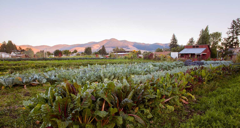 Youth farm - Photo by Jacinda Davis