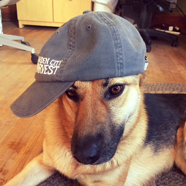 You could win a hat like this and look just as cool as Lola does if you fill out the survey!