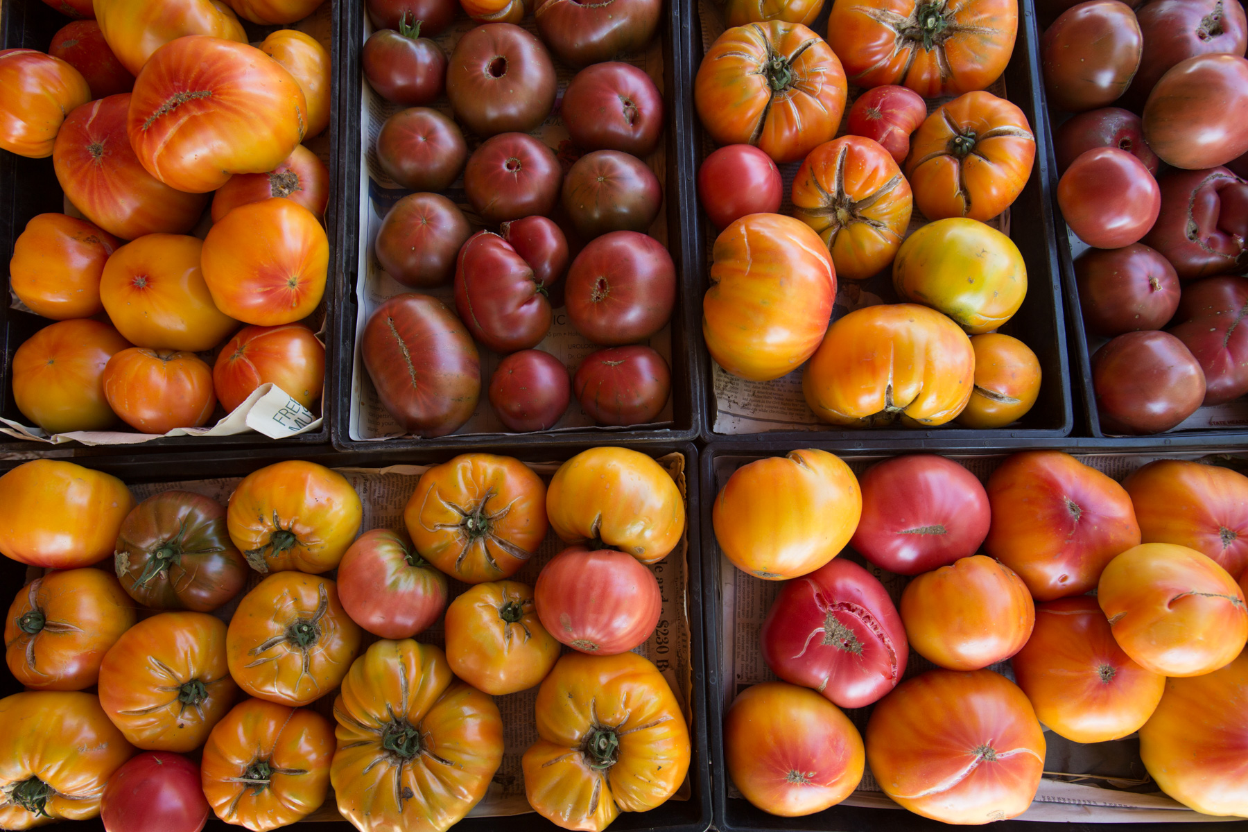 At our Garden City Harvest farms, we also grow: - Purple Cherokee, Black Krim, Sungold Cherry, Muscovitch, Glacier and more!