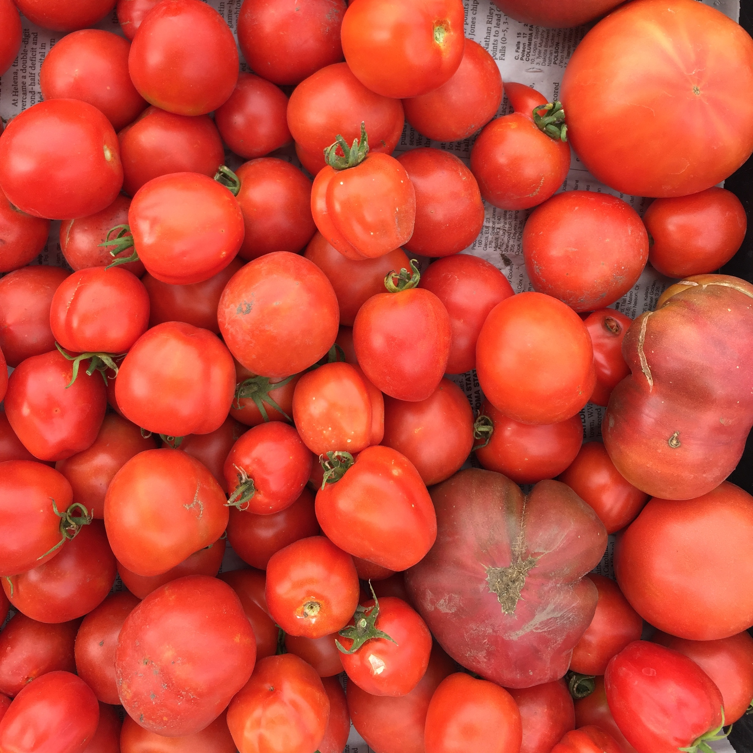 Tomatoes from River Road Farm