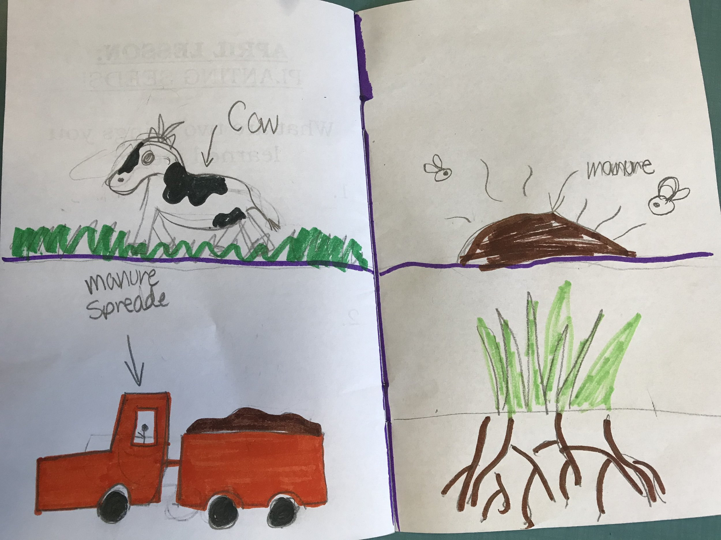 Diagram of grass: cow eats the grass, grass gets digested into manure (which means the kids get to say poop, their favorite!) and the manure gets spread on the fields to grow food and possibly more grass!