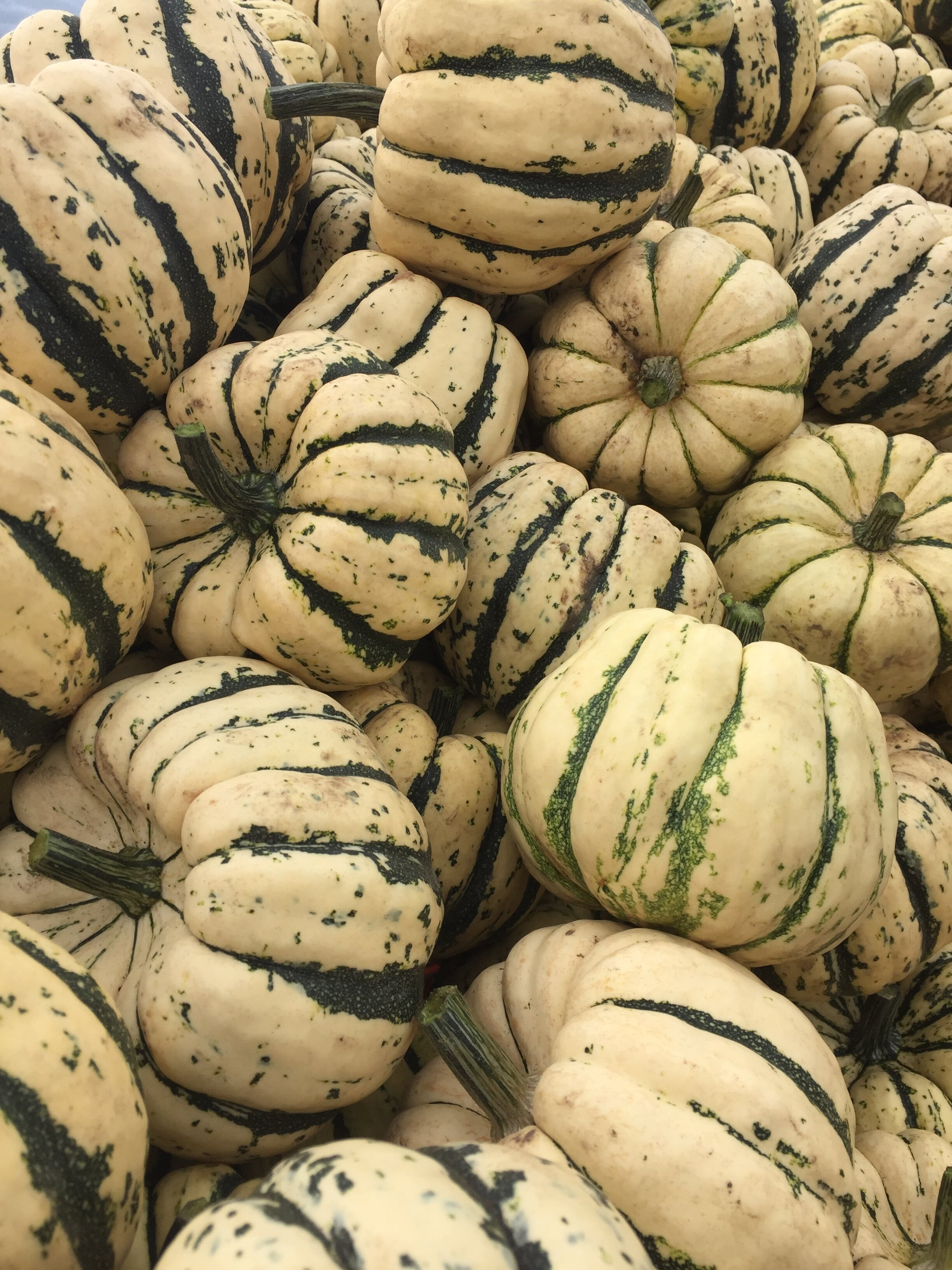 Sweet dumpling acorn winter squash