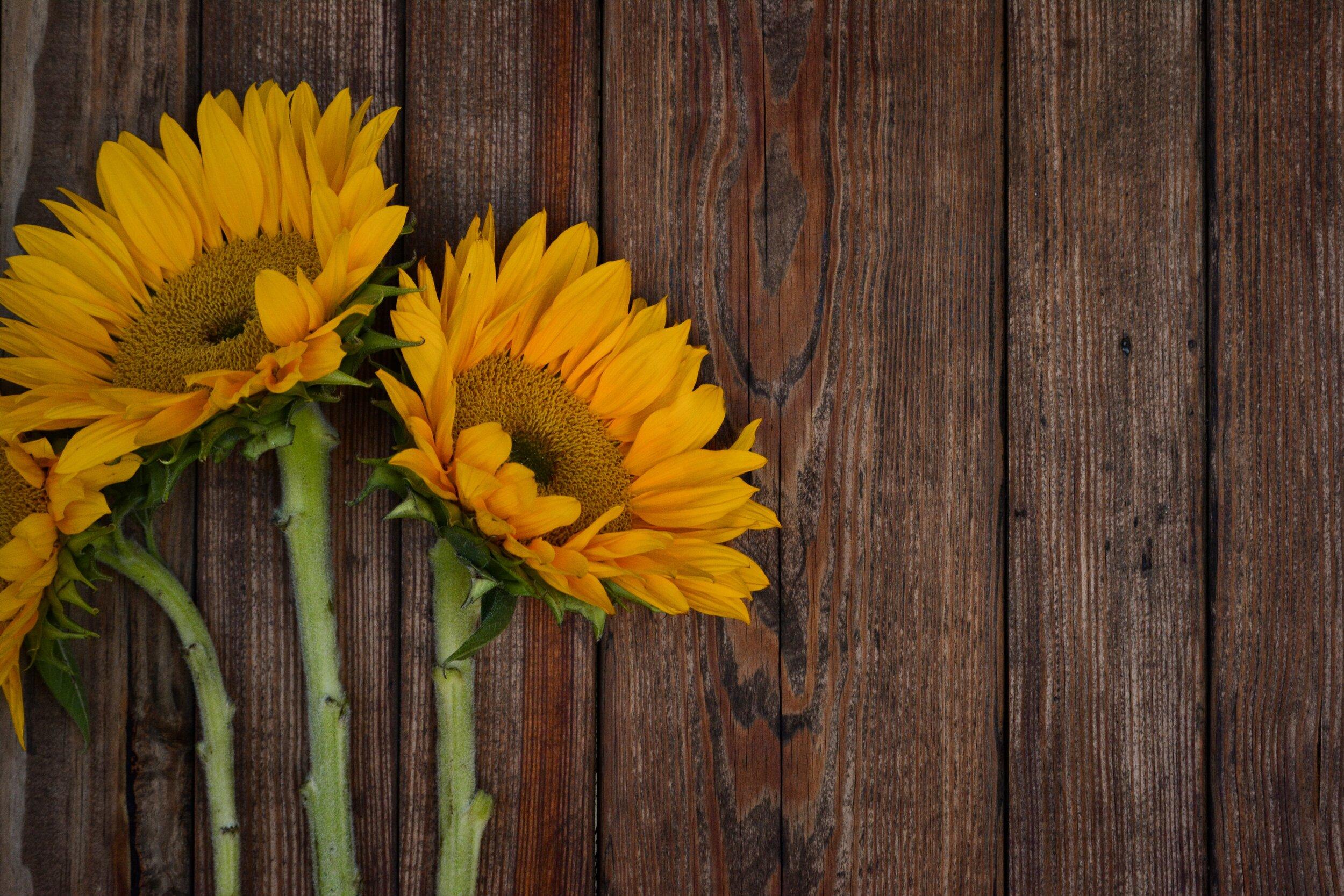 bloom-blossom-flora-1478159.jpg