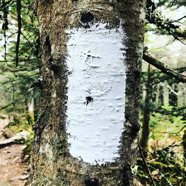 White blazes mark the #appalachiantrail, which runs from #Maine to #Georgia. The trail, proposed by forester and planner #bentonmackaye, imagined the trail inspiring #conservation, recreation, and economic growth at a regional scale. #amc #atc #nps