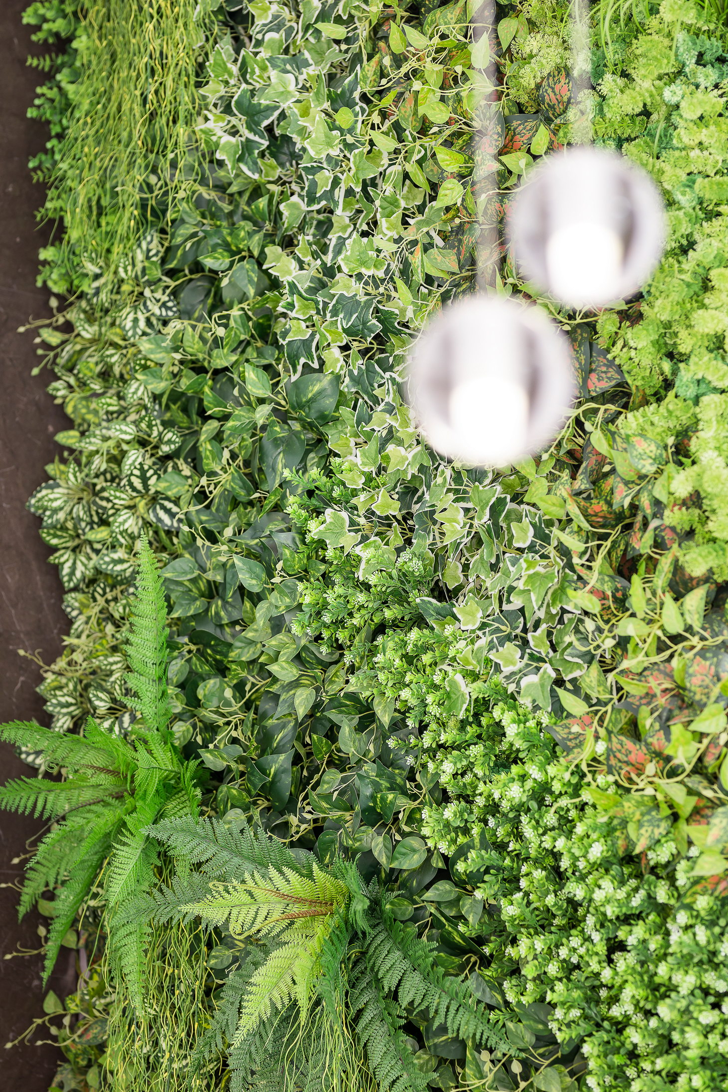 The green wall behind the front desk and the chandelier by Bocci