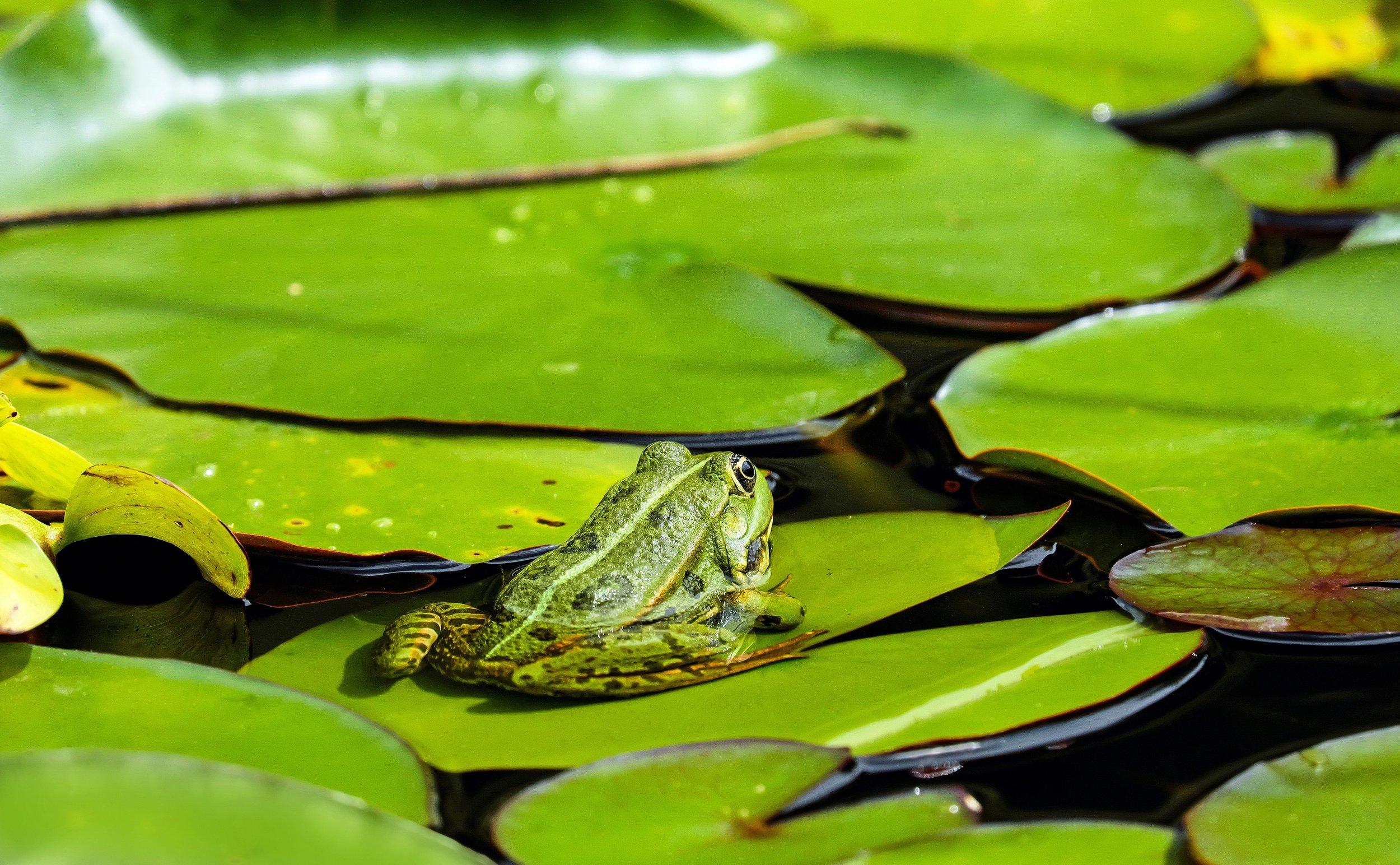 amphibian-animal-flora-122430.jpg
