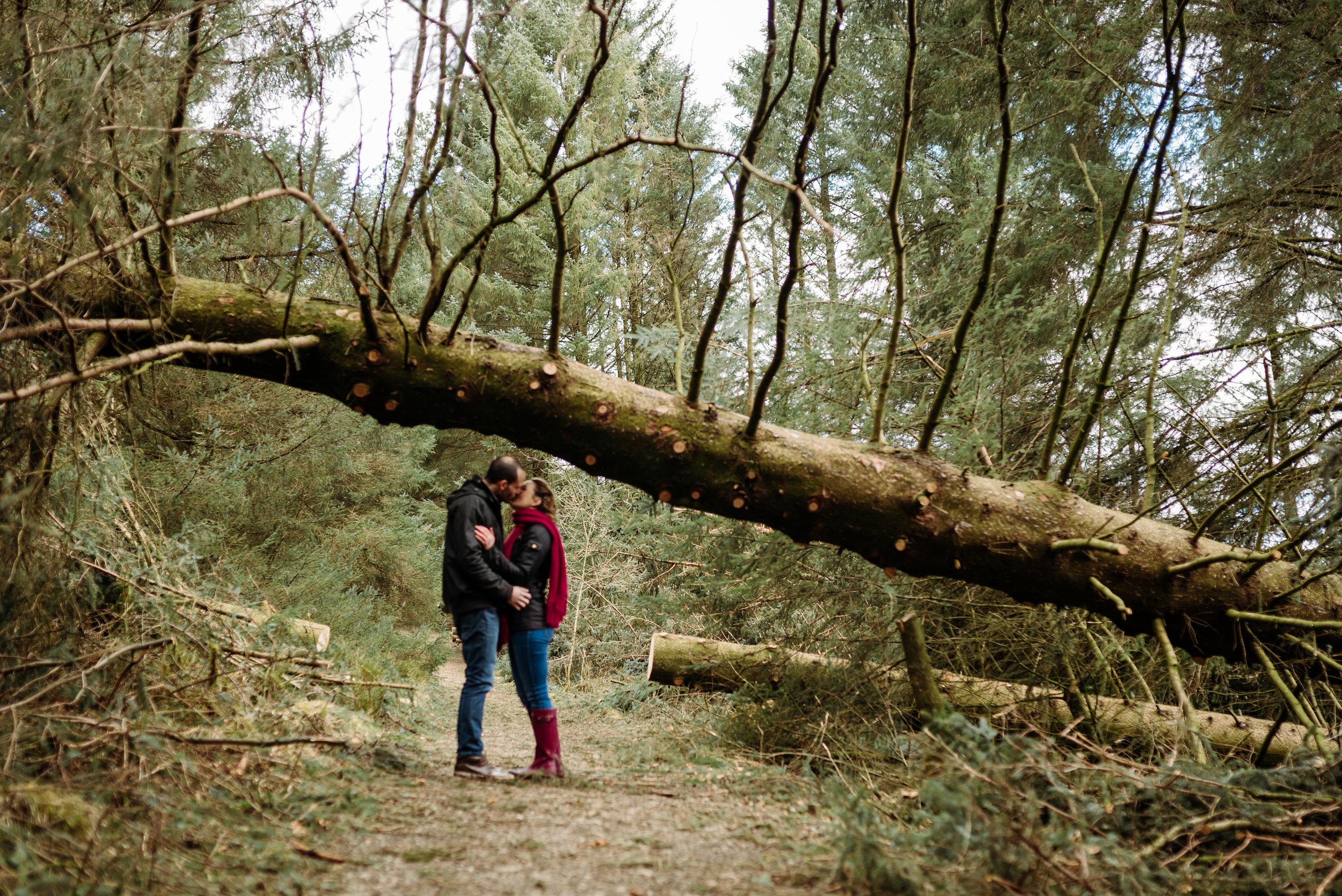Tree down - beacon fell enagagement shoot