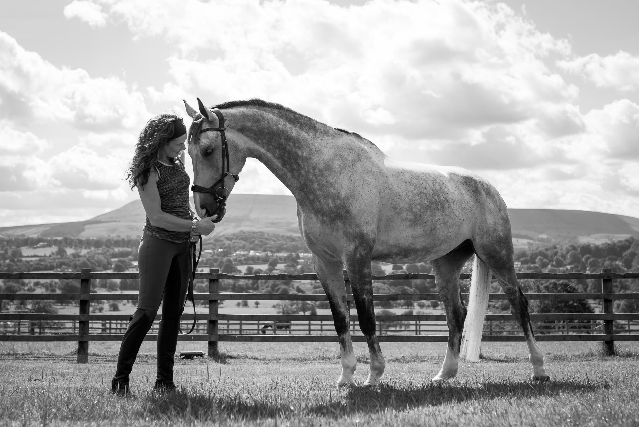 Clitheroe equine photographer