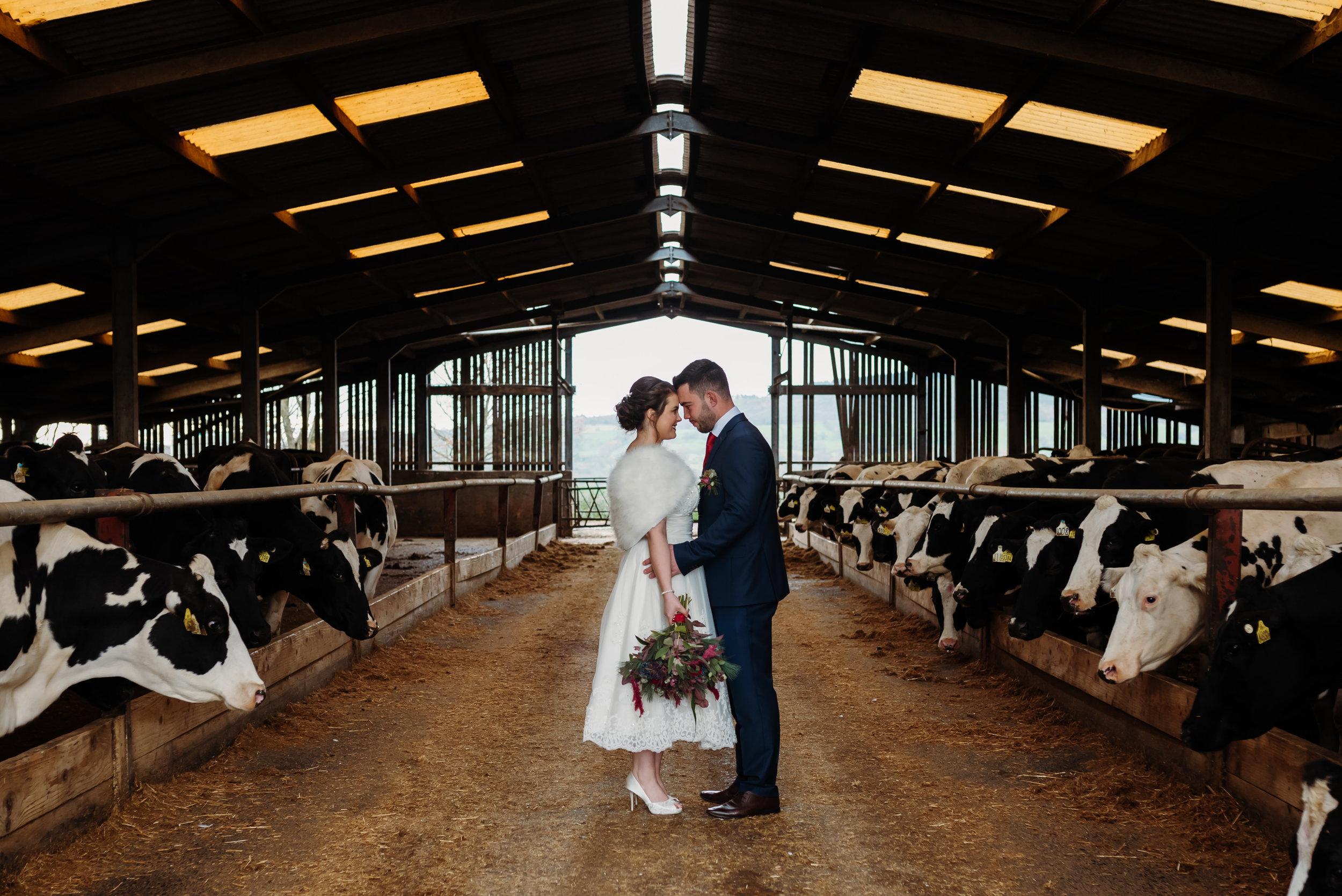 Bashall Barn wedding  - cow shed
