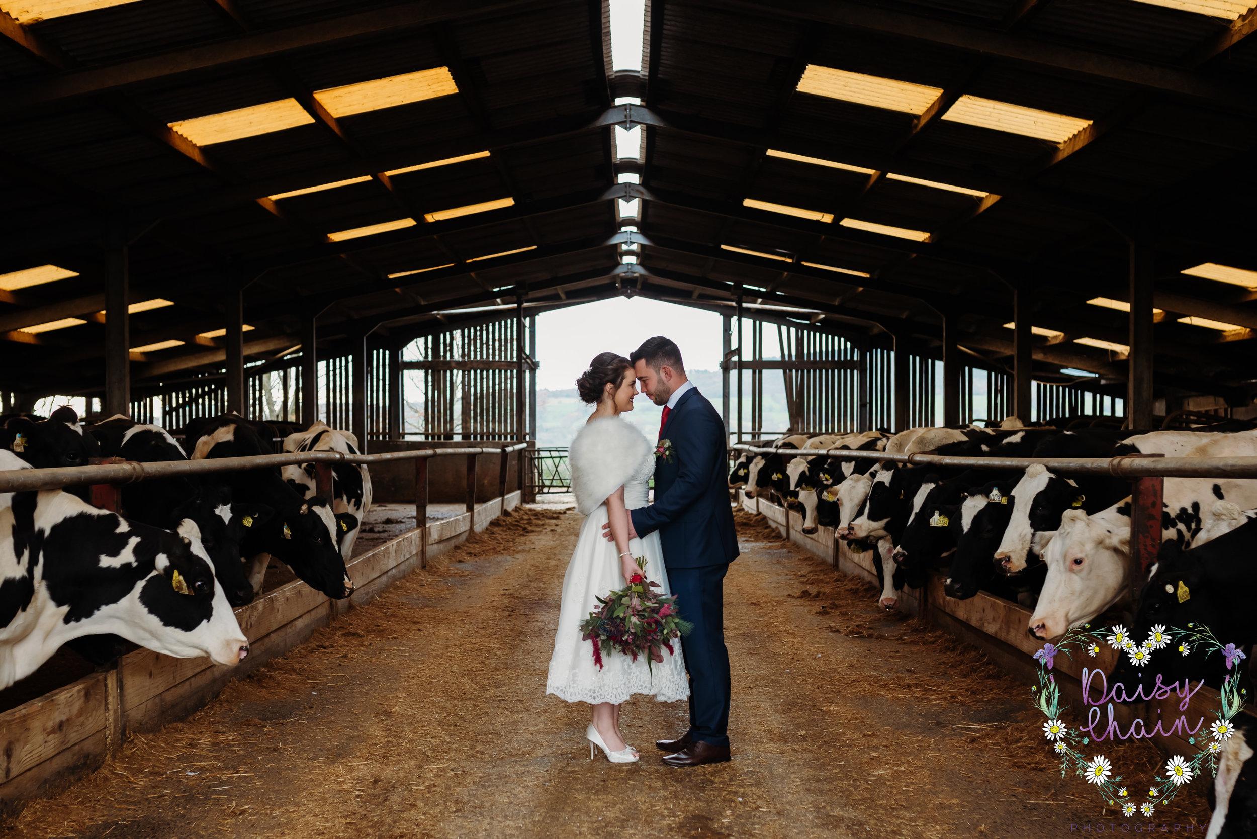Bashall Barn, cow shed photograph