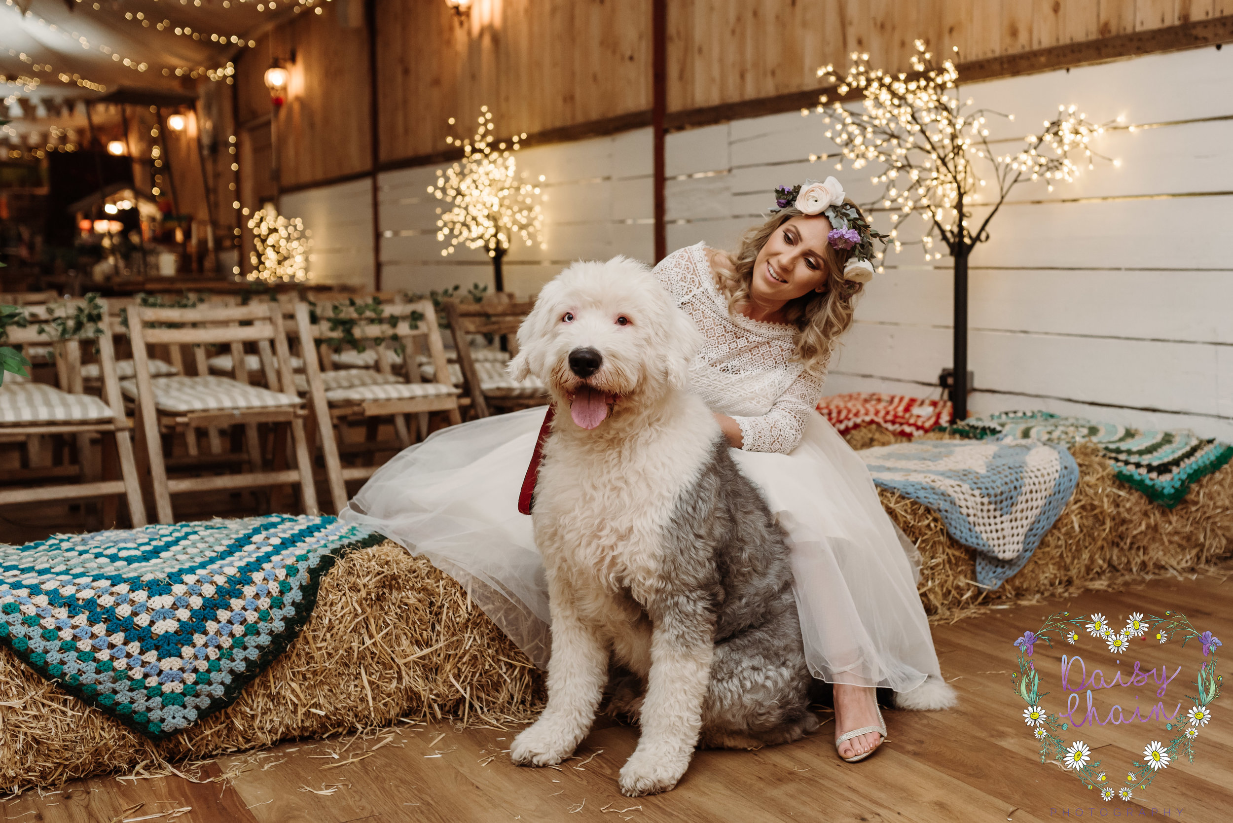 Dogs at weddings - old english sheepdog