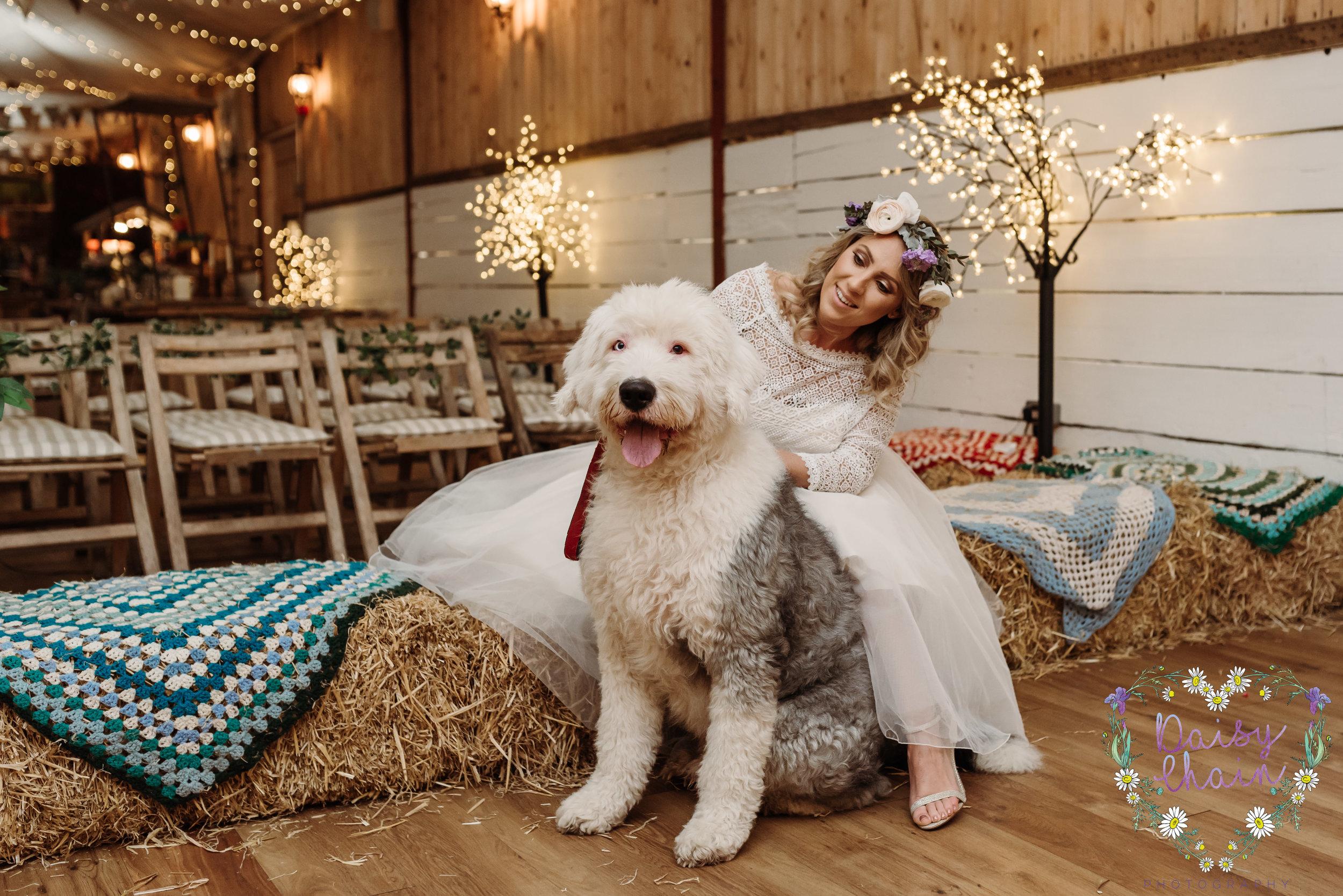 Dogs at weddings - old english sheepdog