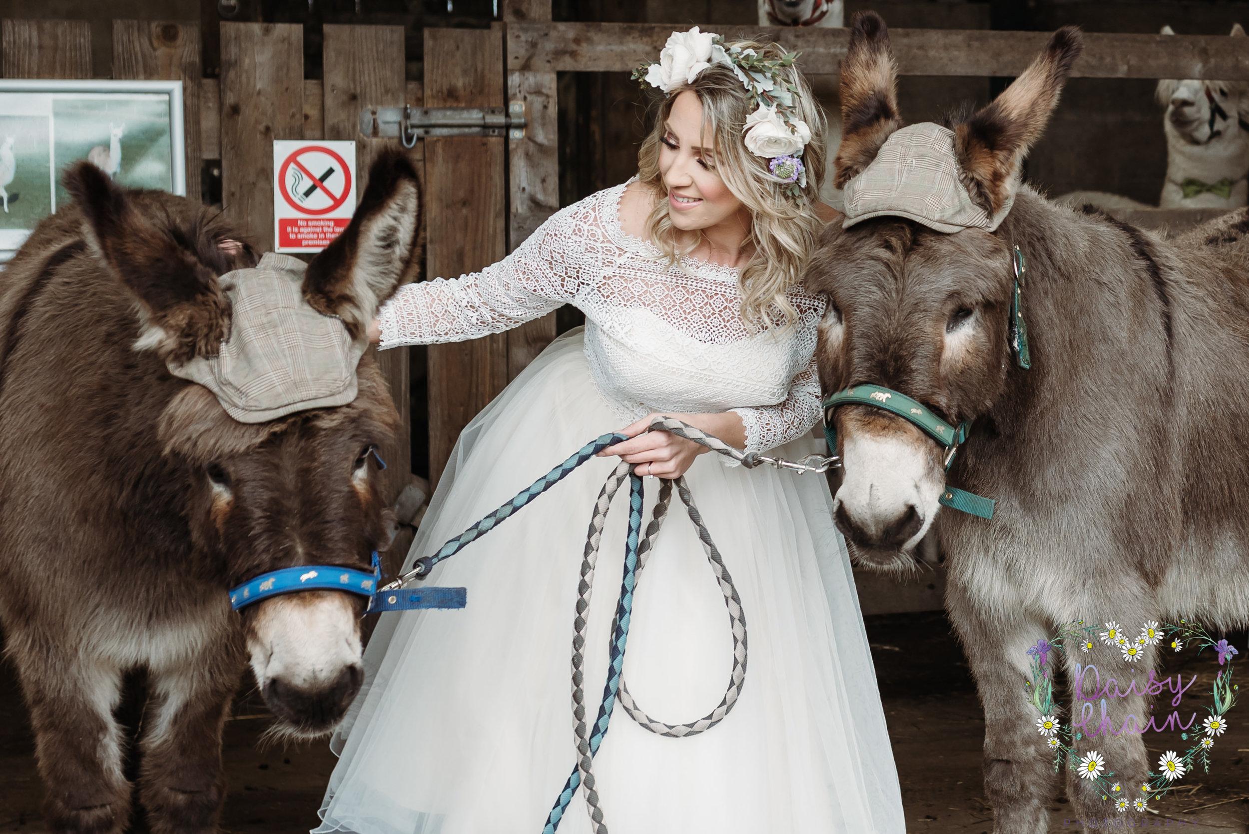 donkeys at a wedding