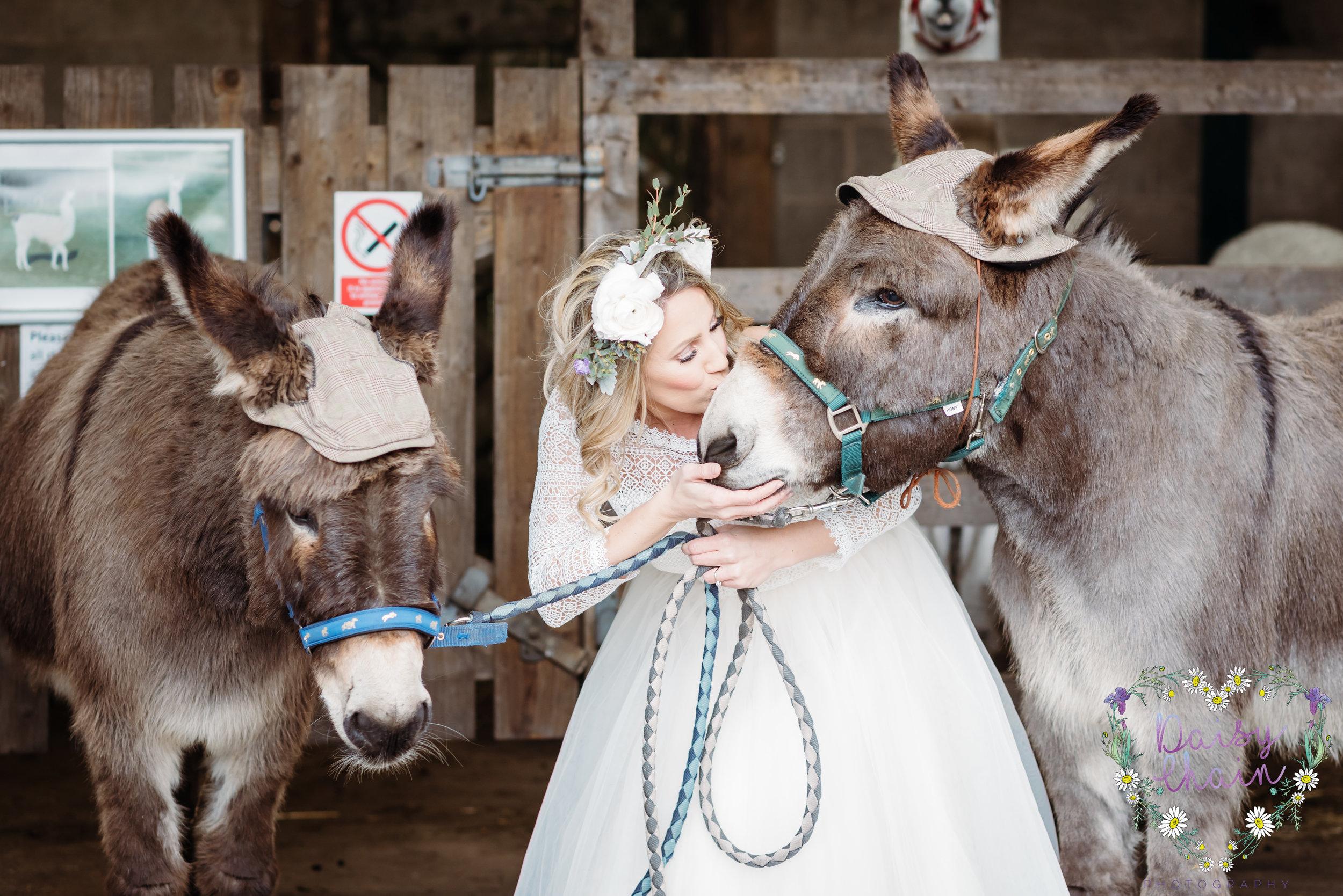 wedding donkeys - lancashire