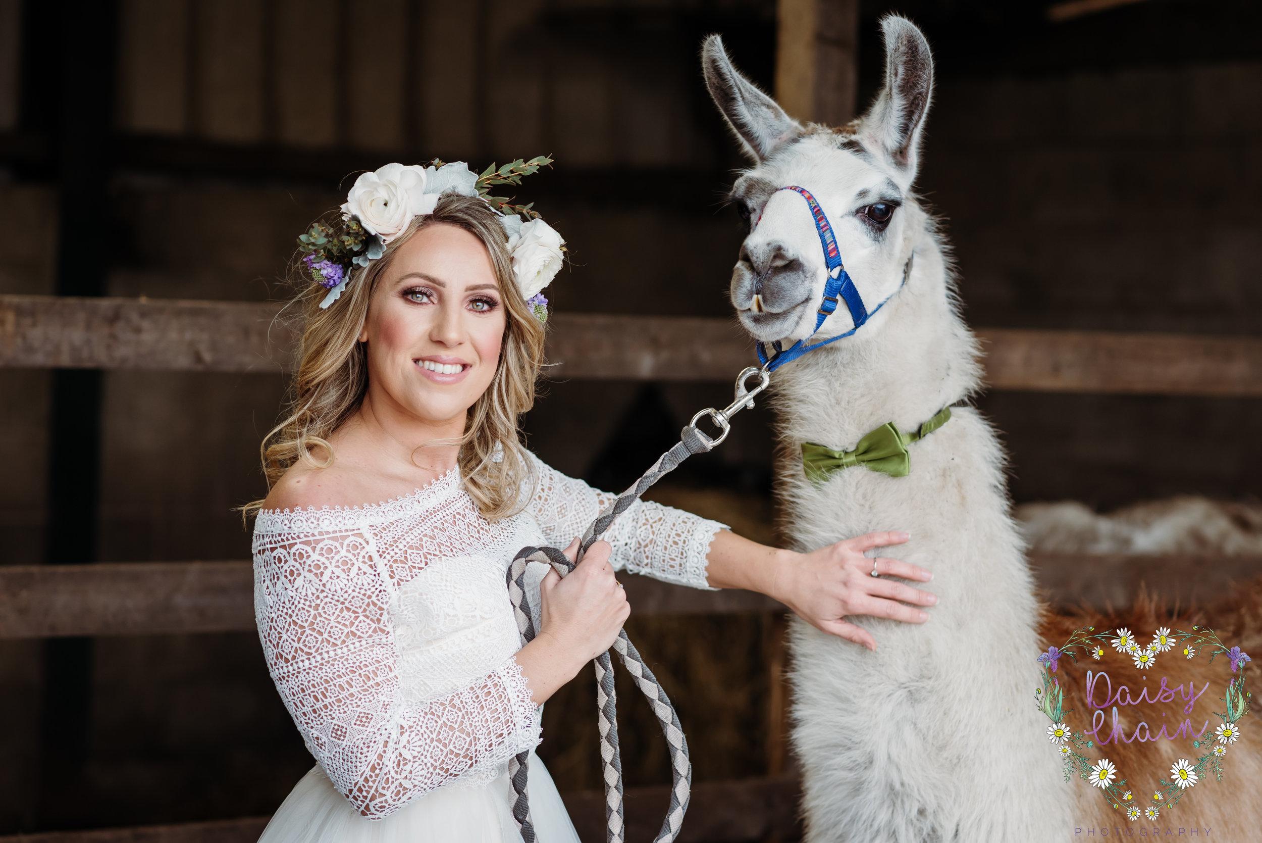 Llams at a wedding - lancashire boho wedding