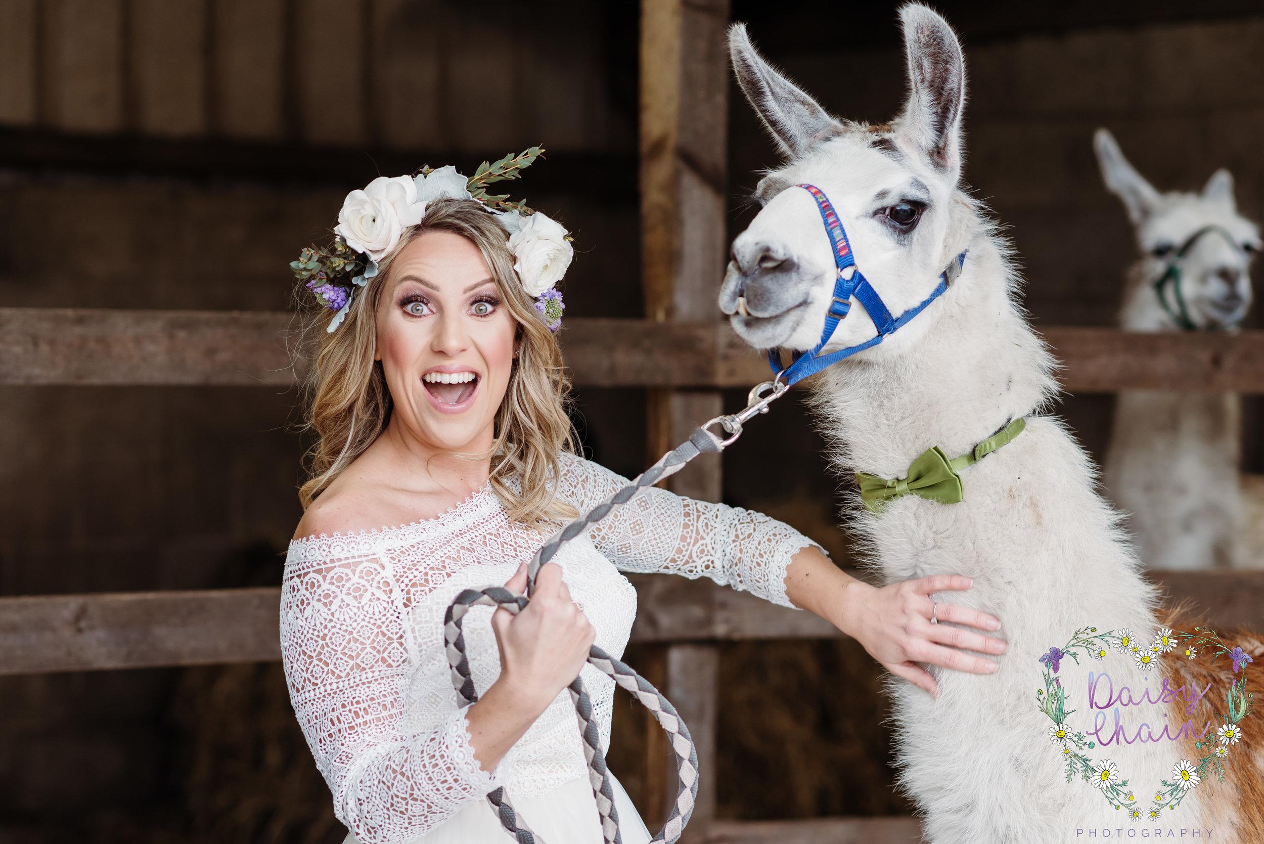 Outdoors wedding with Llamas