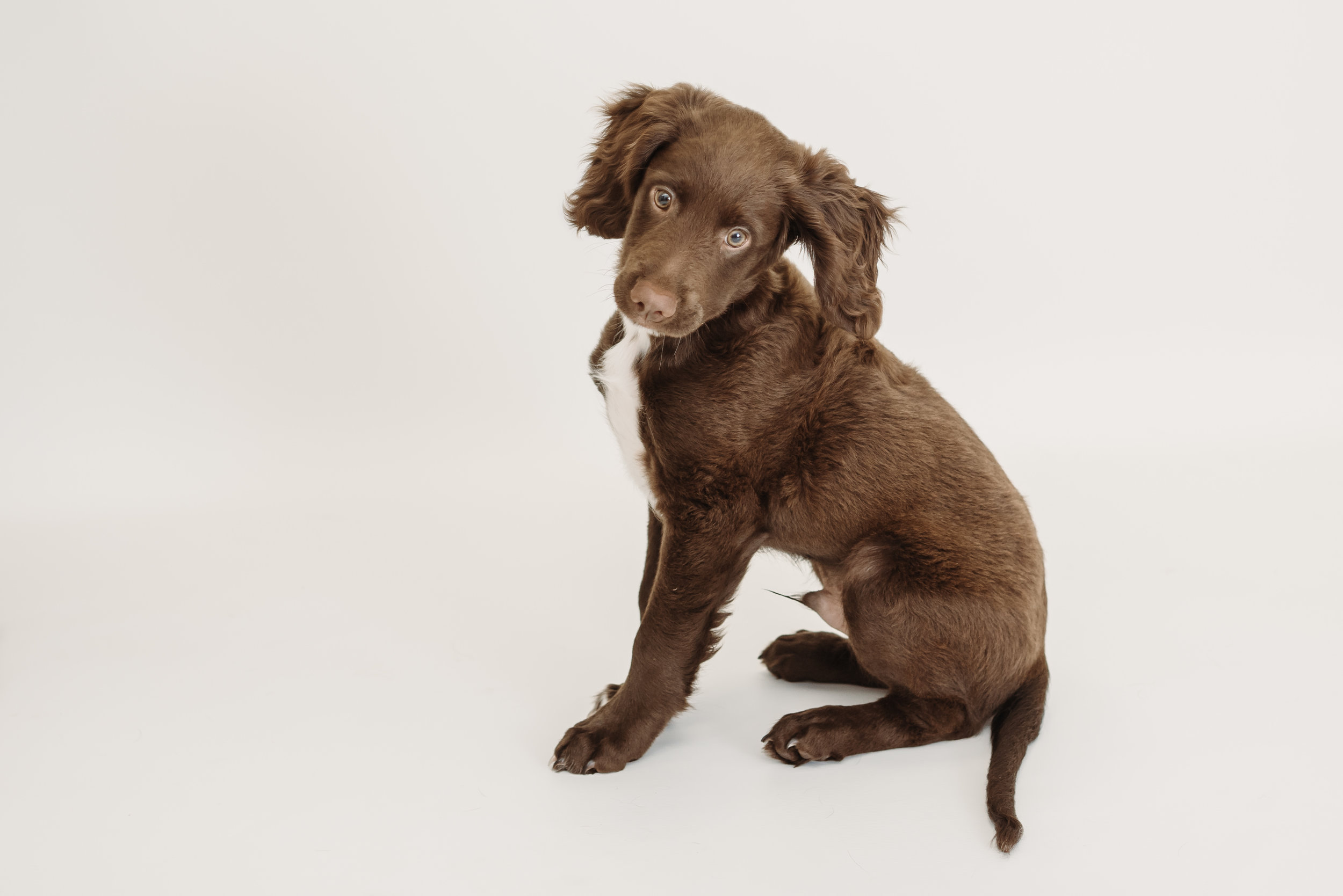 Sprocker photo shoot - Clitheroe