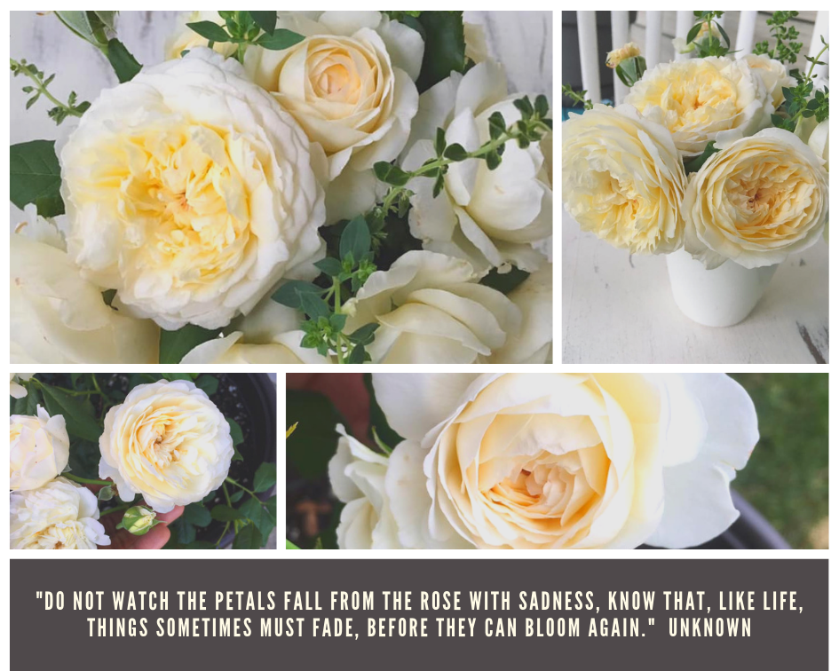 roses collage.png