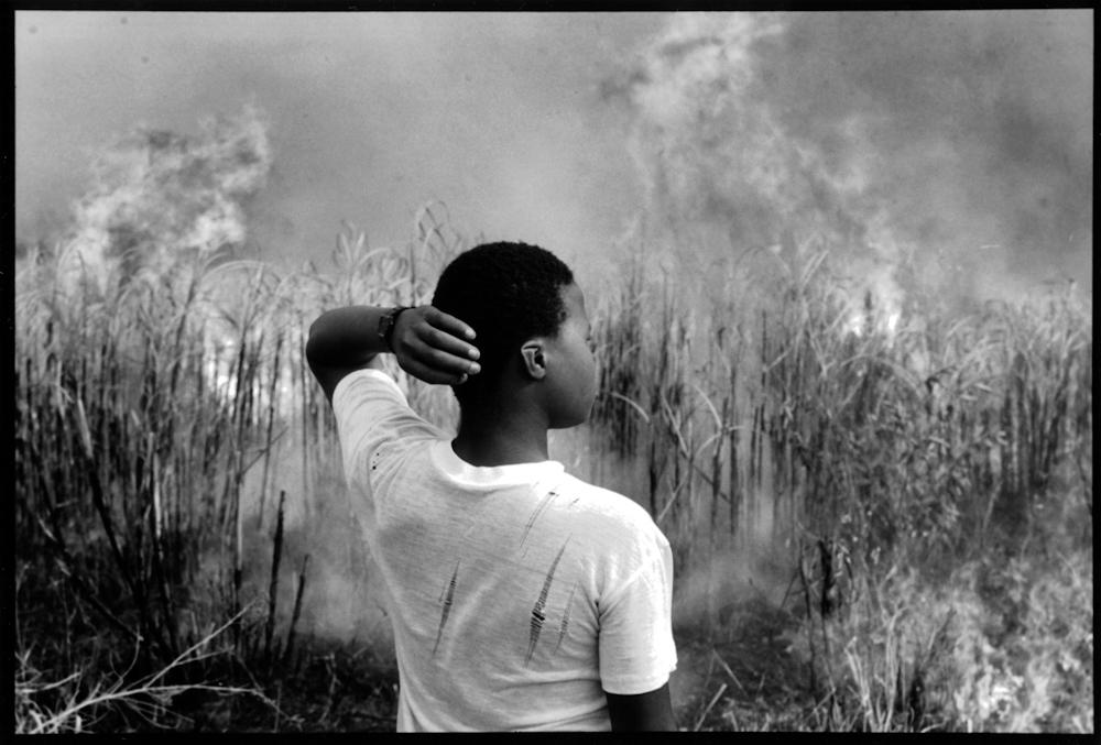 Burning Sugar Cane