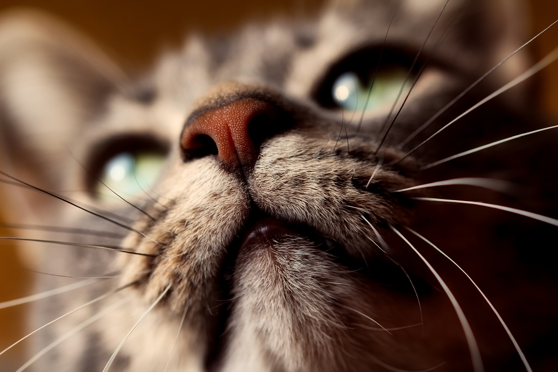 cat-2300648_1920.jpg