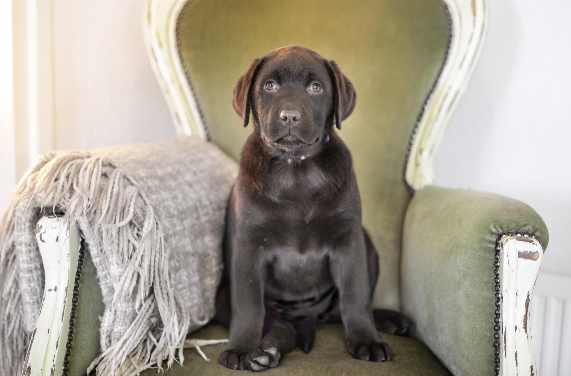 puppy-2041215_1920 LIGHTER.jpg