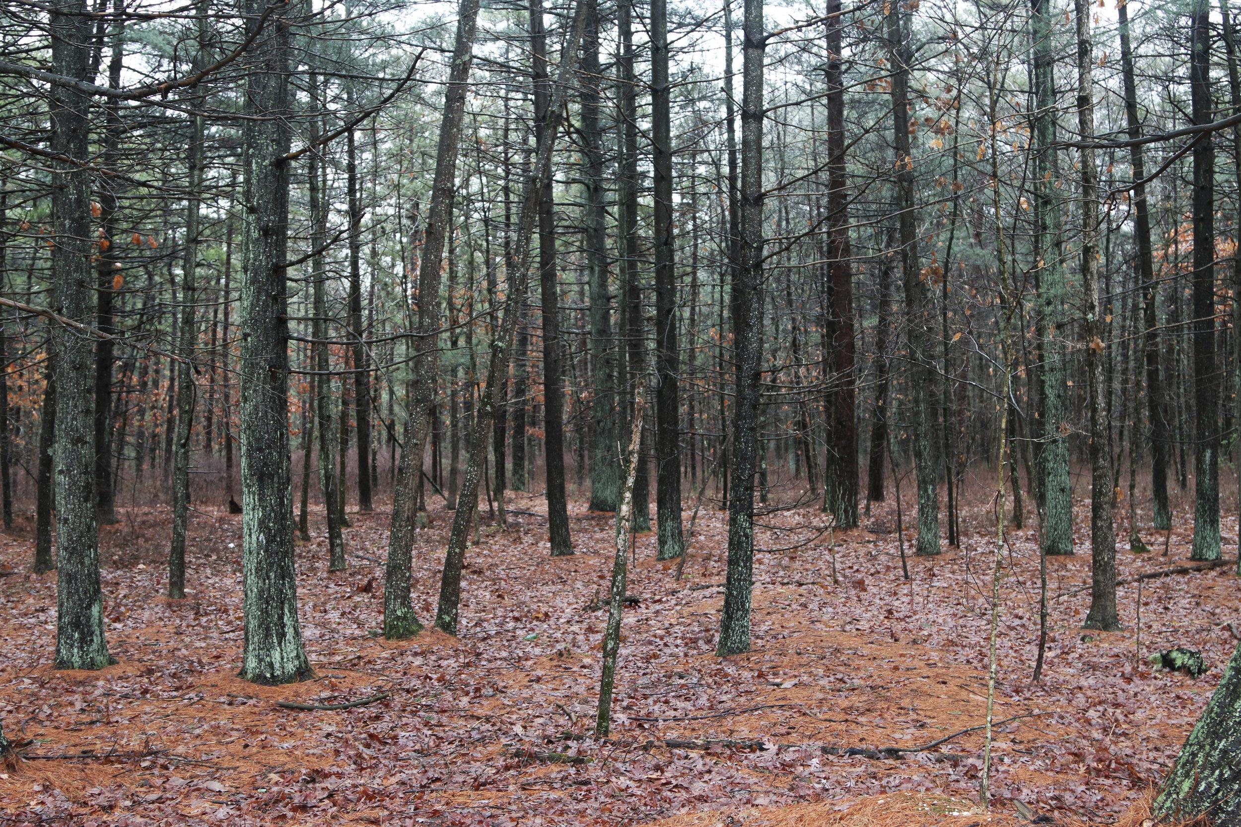 BRENDAN_BYRNE_FOREST.jpg