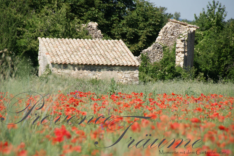 077_Lavendel Provence Gartenfenster.jpg