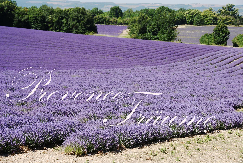 079_Lavendel Provence Gartenfenster.jpg
