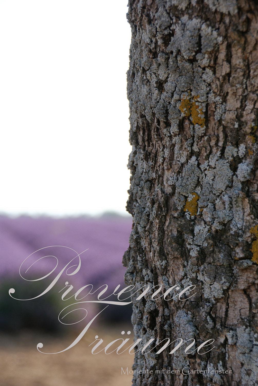 083_Lavendel Provence Gartenfenster.jpg