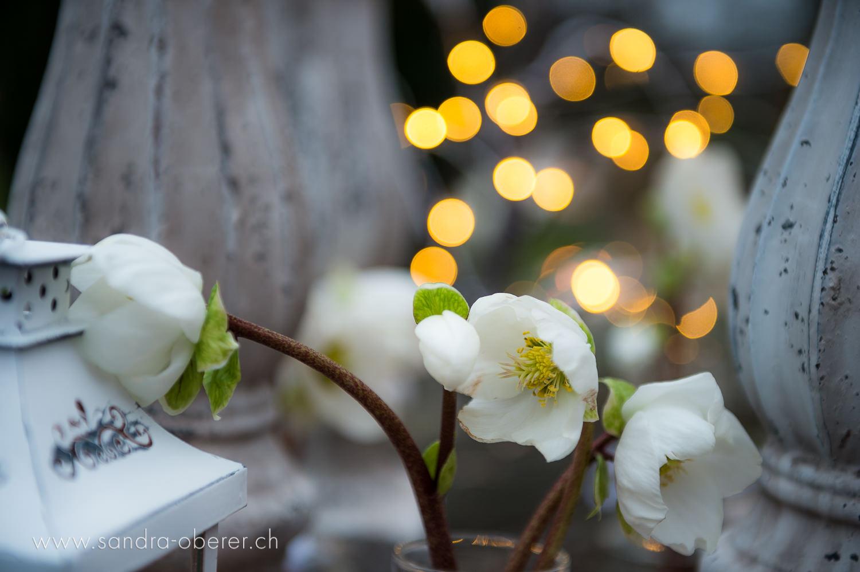 017__S042254_Gartenfenster Lichtermeer.jpg