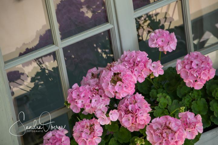 358_850_6129_Gartenfenster-Sommerfest.JPG