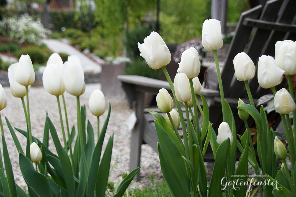 Gartenfenster Outdoor Garten-3.jpg