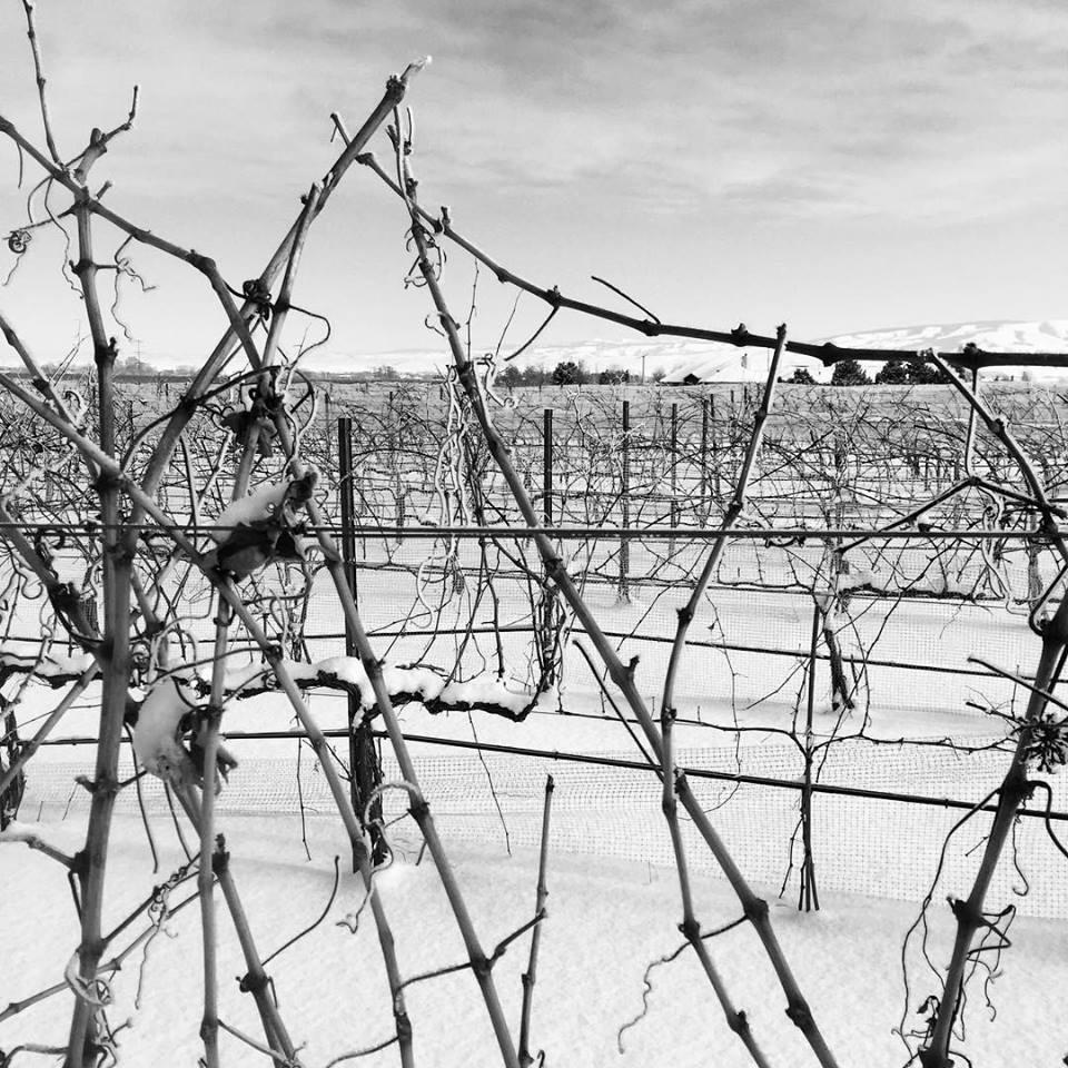 frosty vines.jpg