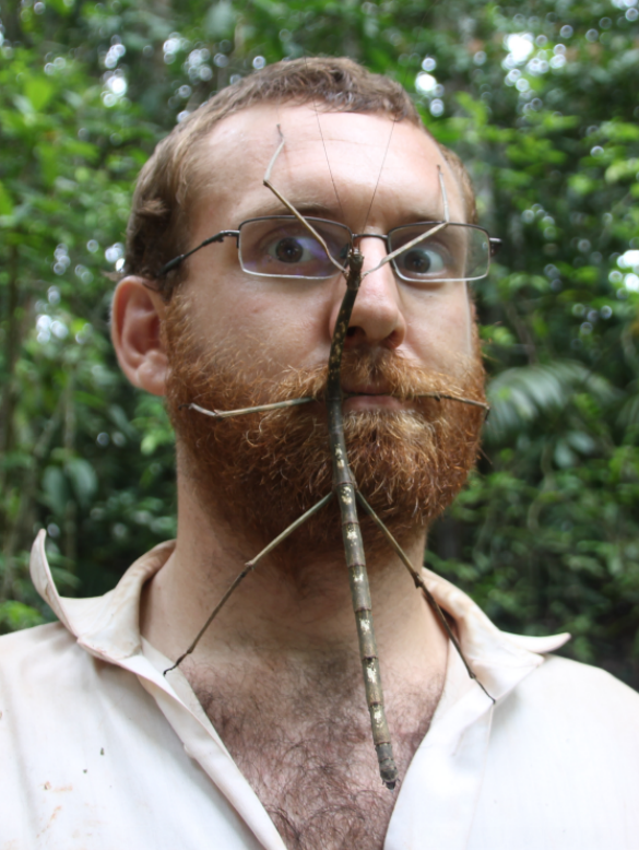 Stick INsect - Andrew Quitmeyer.png