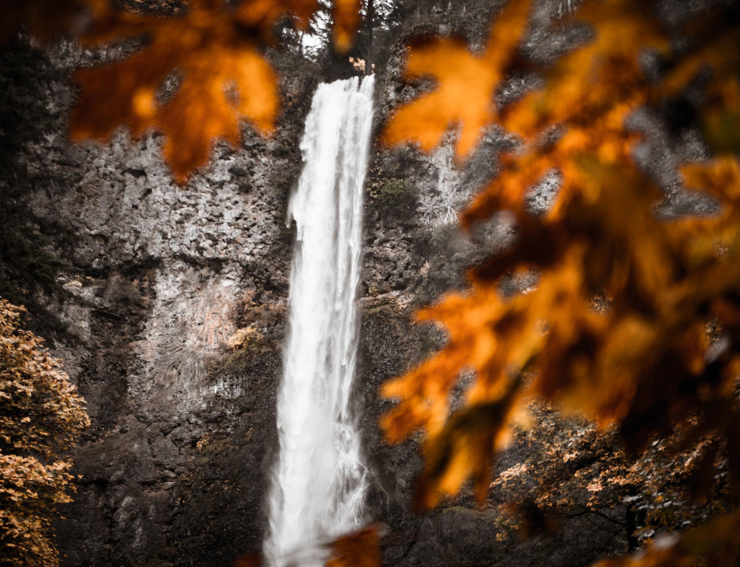 Multnomah_Fallcolors.jpg