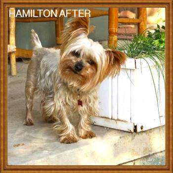 Hamilton After.jpg