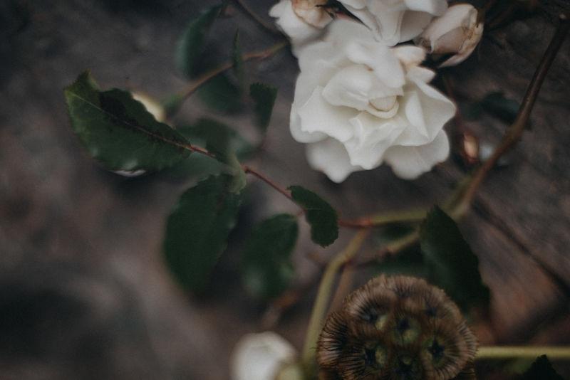 blumen_garten_flowers_garden_ikoflowers.jpg