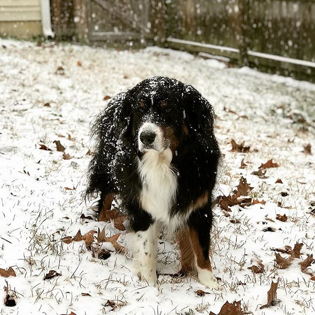 The snow was fun while it lasted but we are ready for everything to return back to normal! Did your pets enjoy the snow? ❄️ #danielislandvet #danielislandsc 🐾